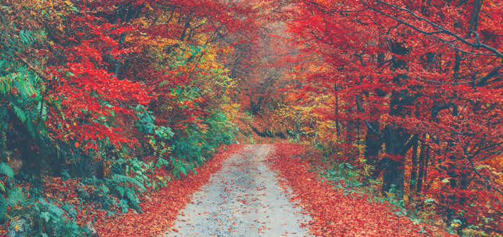 Autumn: What is it Time for? | Resetting the Rhythms of LIfe series | sarahdamm.com